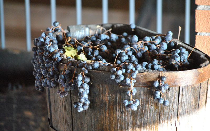 Domìni Veneti - uve vini veronesi