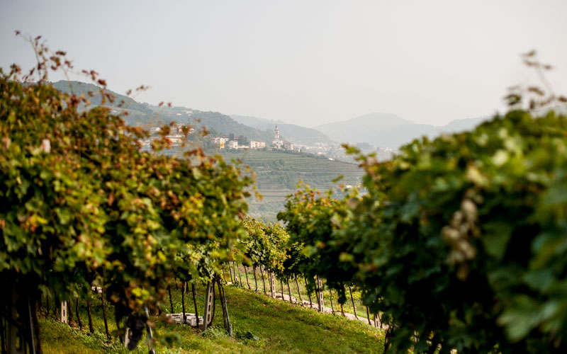 Domìni Veneti - veduta vigneti in Valpolicella
